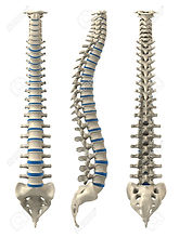 3196838-different-views-of-a-human-spine