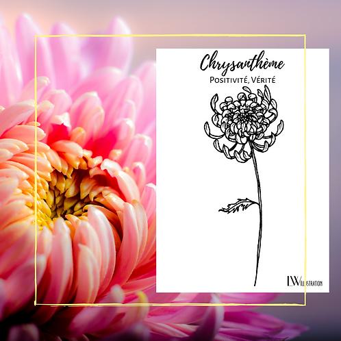 Carte Postale Chrysanthème