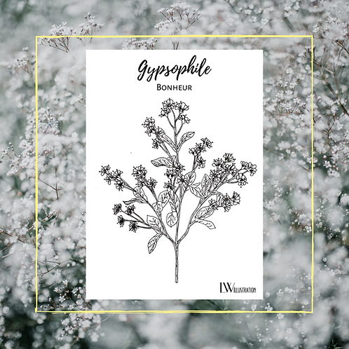 Carte Postale Gypsophile