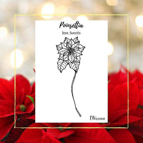 Carte Postale Poinsettia