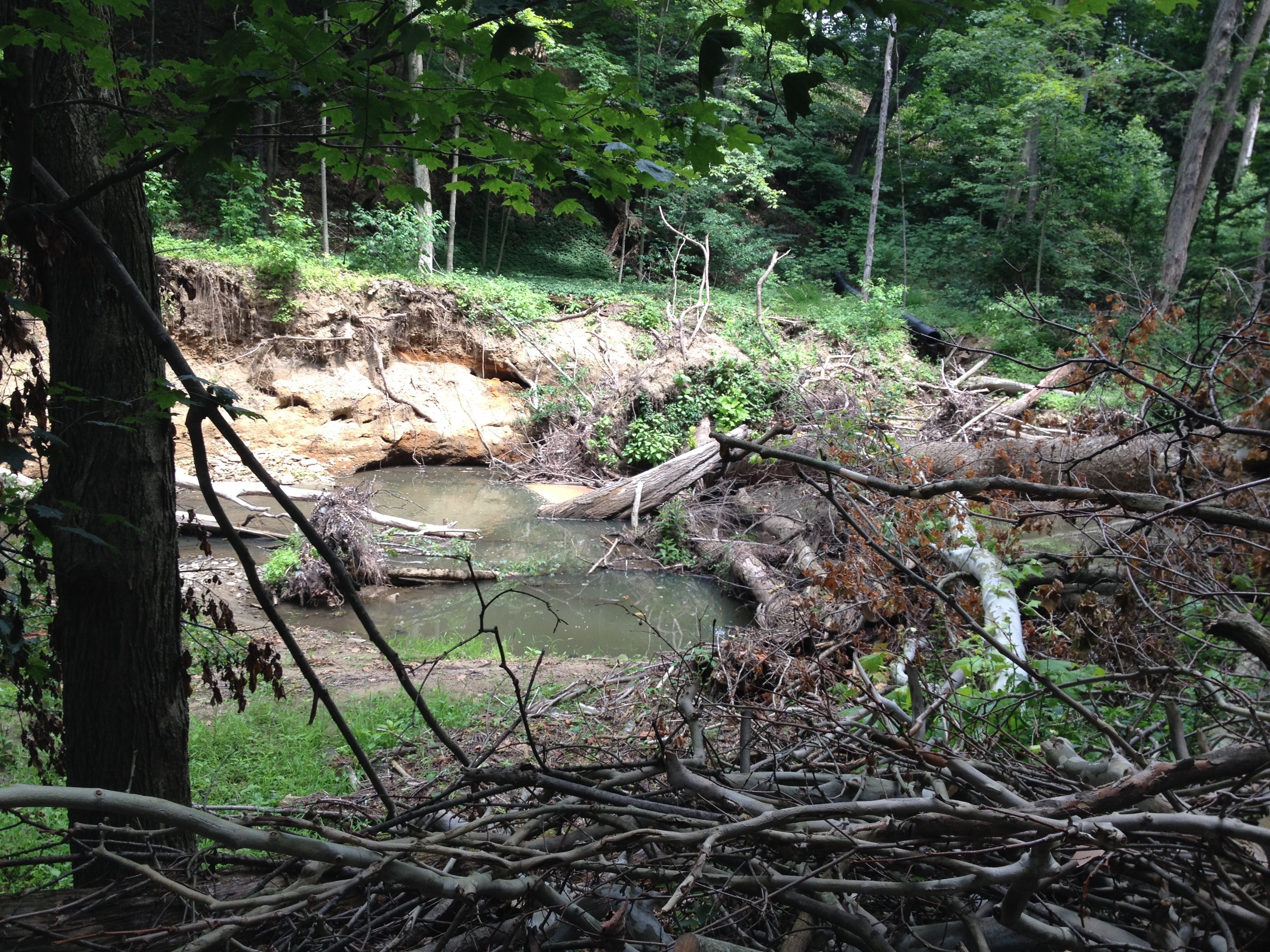 YELLOW CREEK DEVASTATION