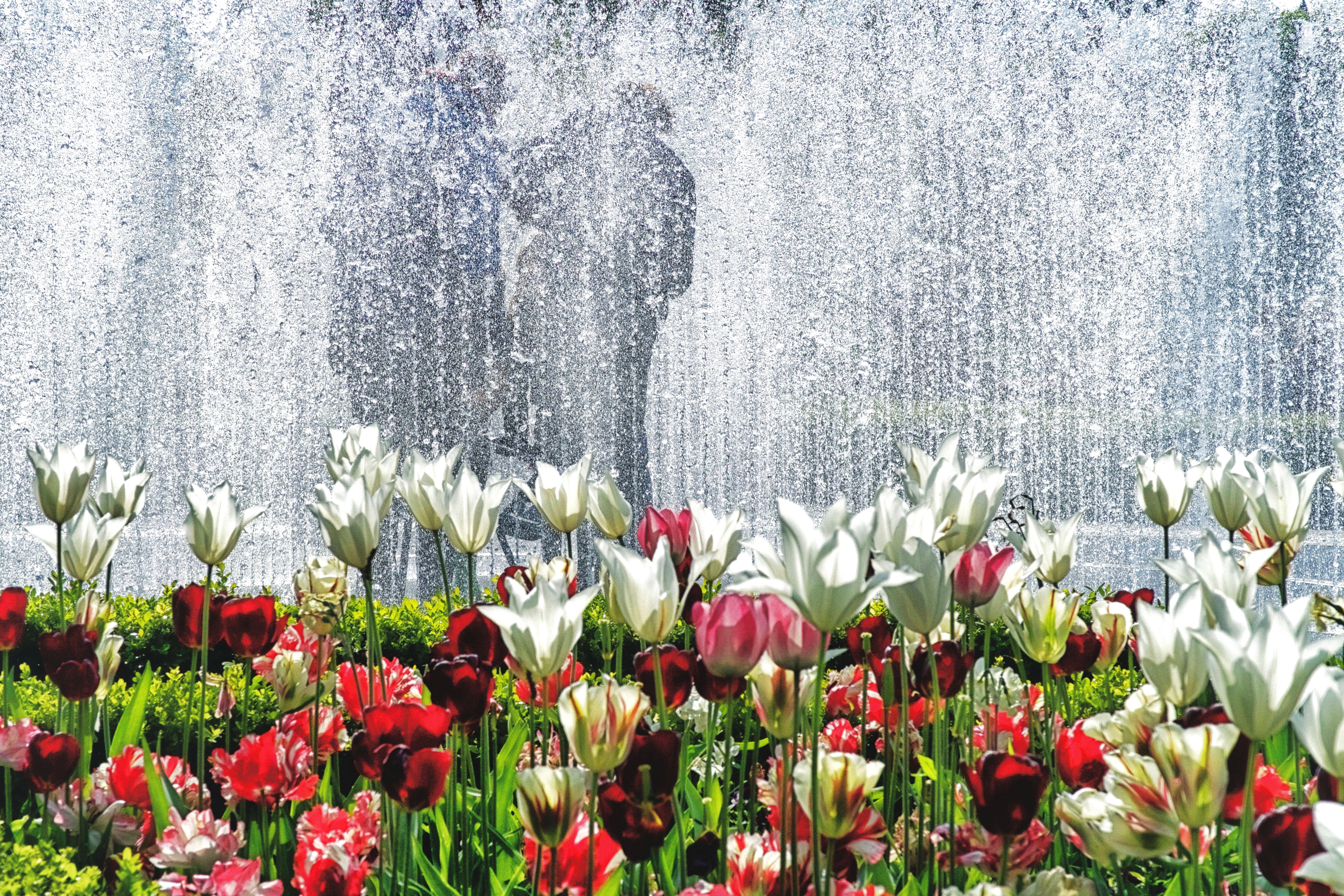 Fountain and Flowers, Amsterdam