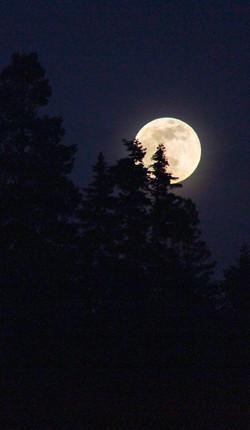 Full Moon, Sky forest