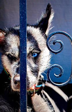 Puerto Vallarta Dog