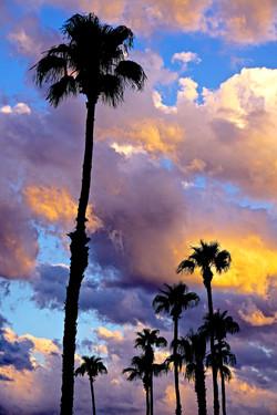 Dusk, Palm Springs