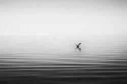 Serene Salton Sea