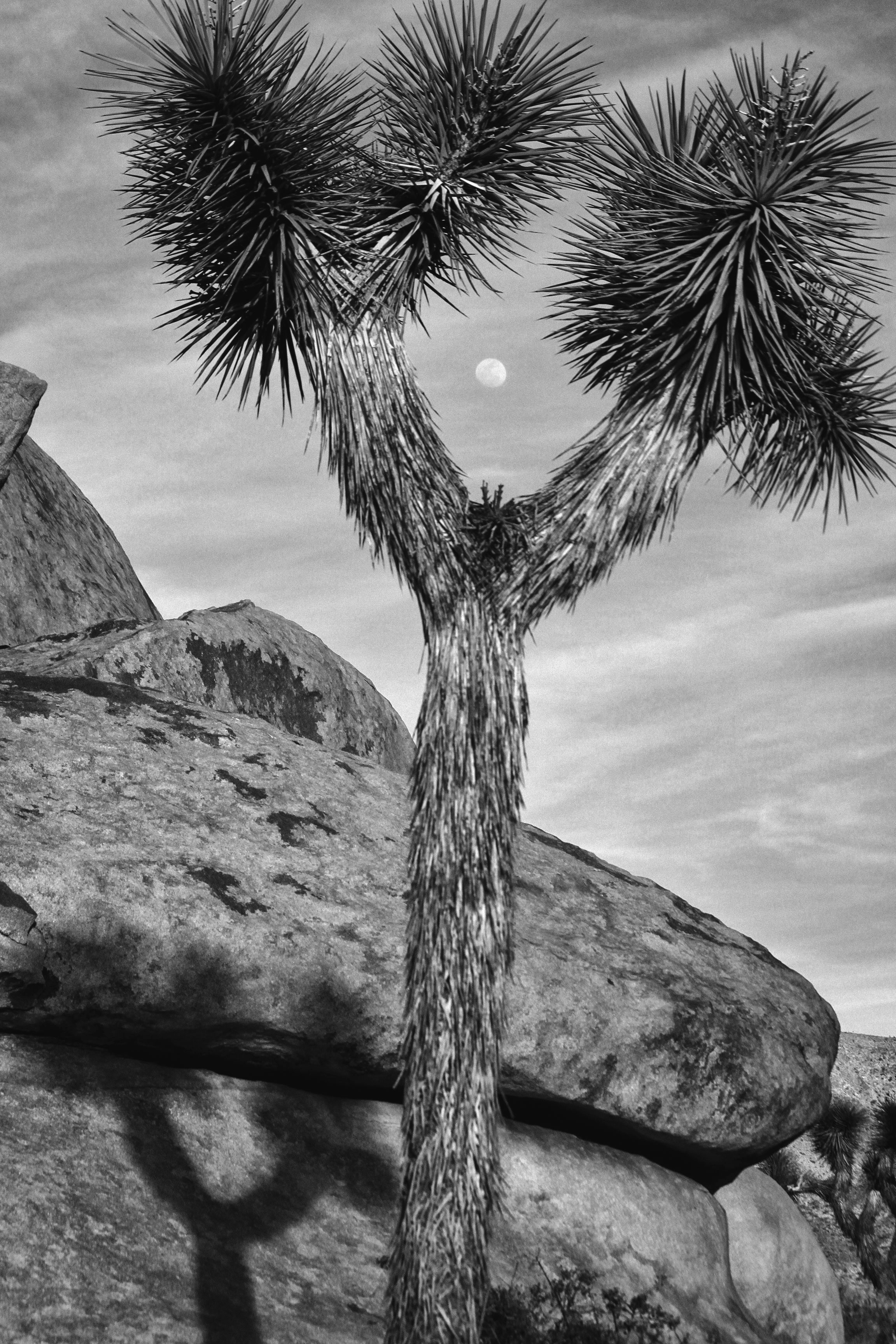 Joshua Tree Cheerleader