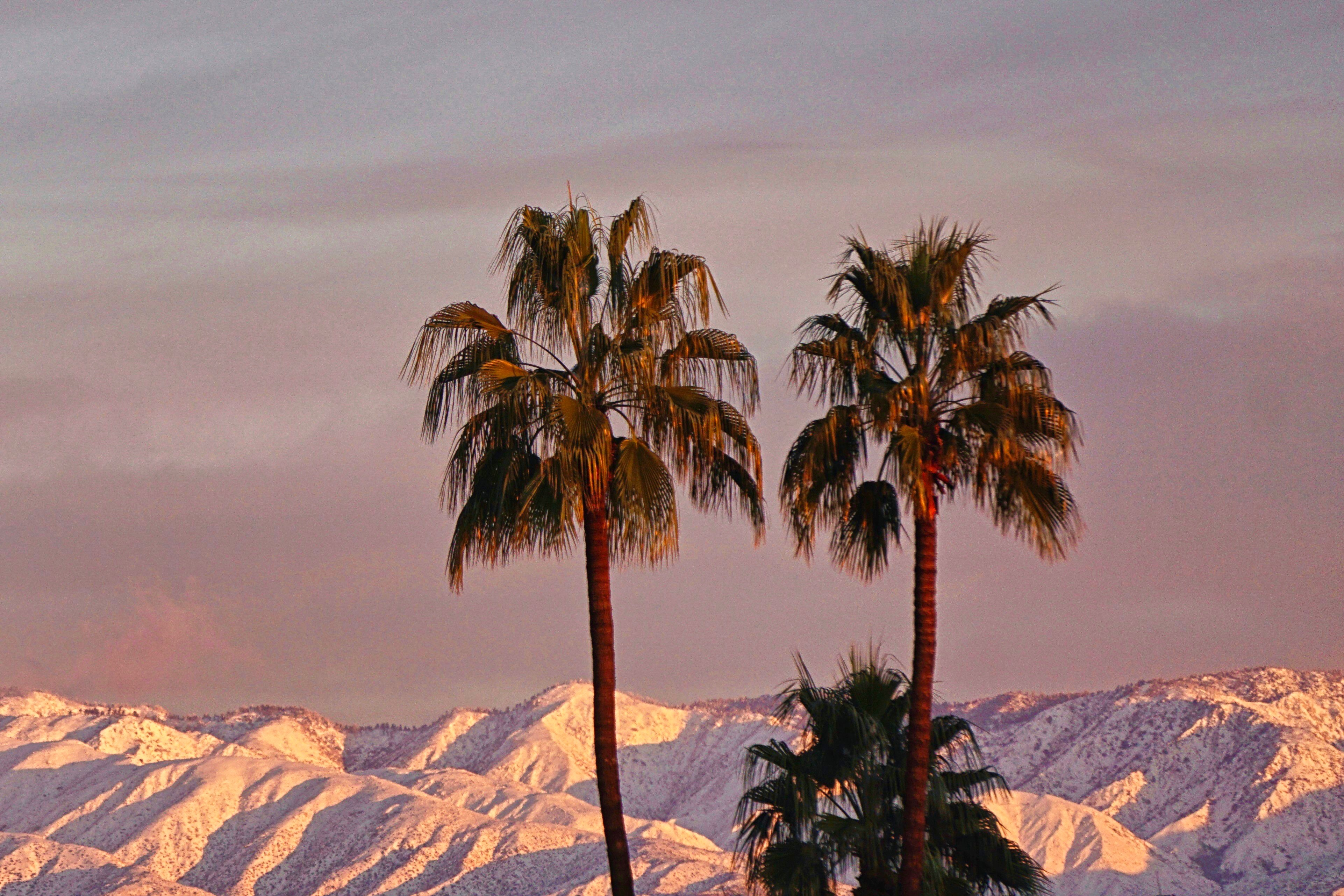 2 Palm Trees, Winter Dawn