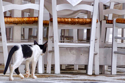 Mykonos Chairs with Cat
