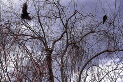 2 Ravens, Palm Springs