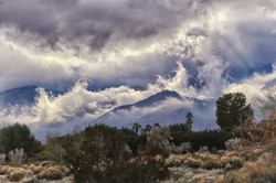 Palm Springs Winter