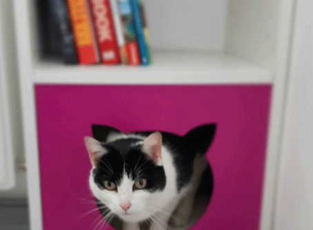 DIY cat hideout during lockdown - IKEA Billy bookcase hack.