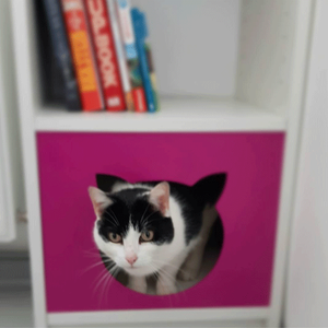Cat looking out of a Pink Cat shaped panel fixed to a Billy bookcase shelf
