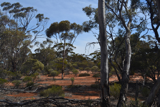 Western Woodlands