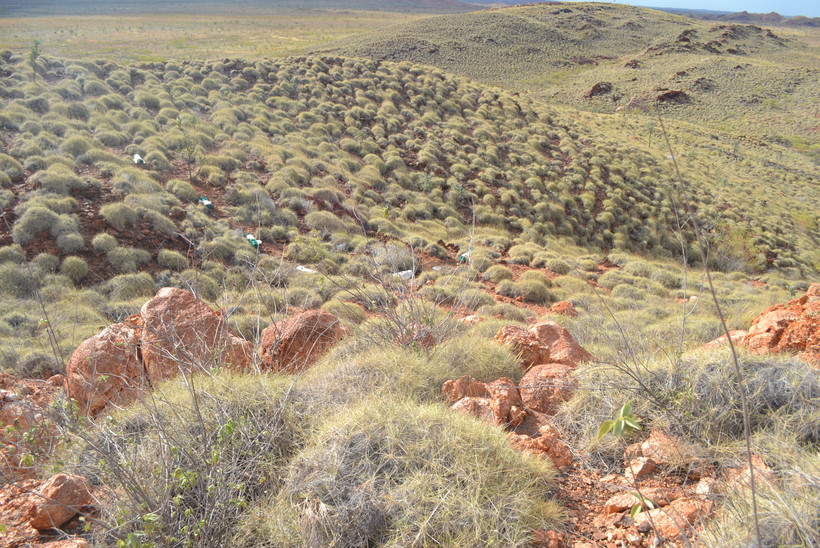 Spinifex covered hills