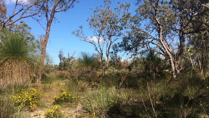 Banksia Woodland