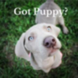Puppy checklist.png
