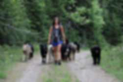 Vanessa Robert and one of her dog groups, training and hiking.