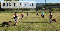 Vernon dog training