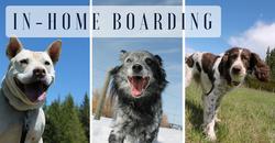 Vernon dog boarding