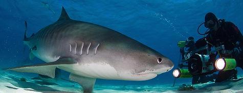 Diving Indian Ocean, Atlantic Ocean, Pazific Ocean,