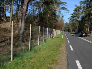 Long highway sections with wildlife fences are more effective in reducing wildlife-vehicle collision