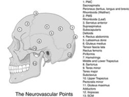 points-neurovasculaires.jpg