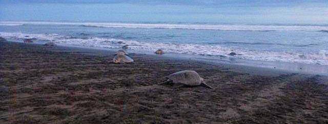 turtle-observation-costa-ri.jpg