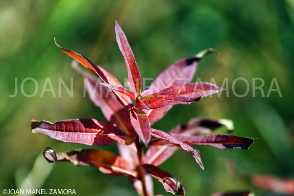 00304 PLANT