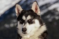 Mushing Andorra - Dog sled