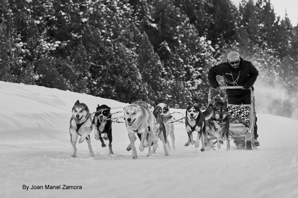 Dog sled andorra