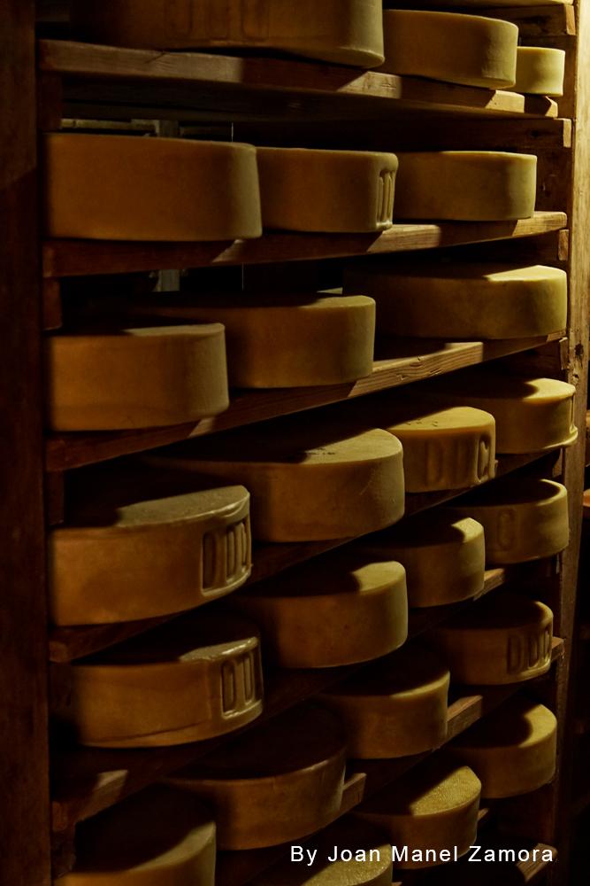 cheese factory chandanwari nepal