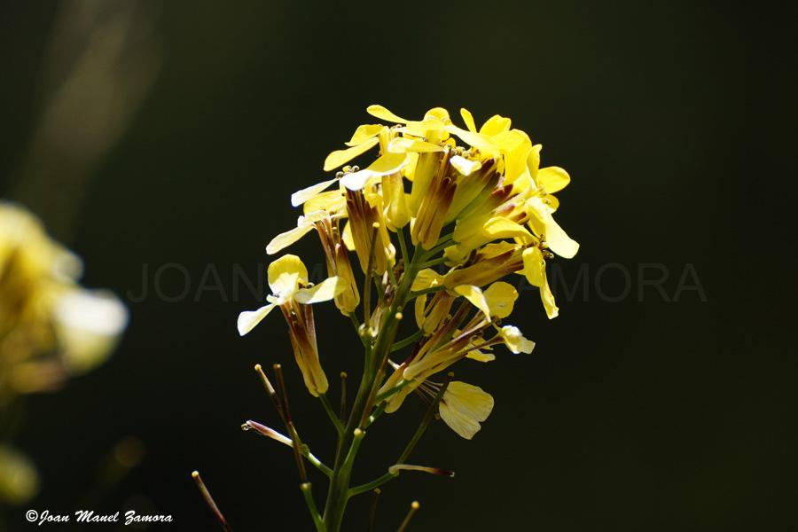 00179 - FLOWER