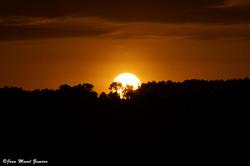 05495 SUNSET TREE