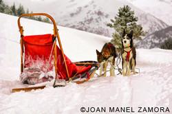 06771 dog sledge