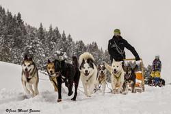 06434 SLED DOG