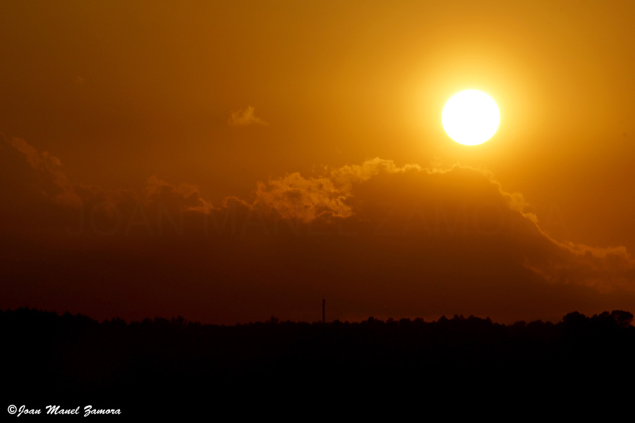 05591 SUN-FINE ART