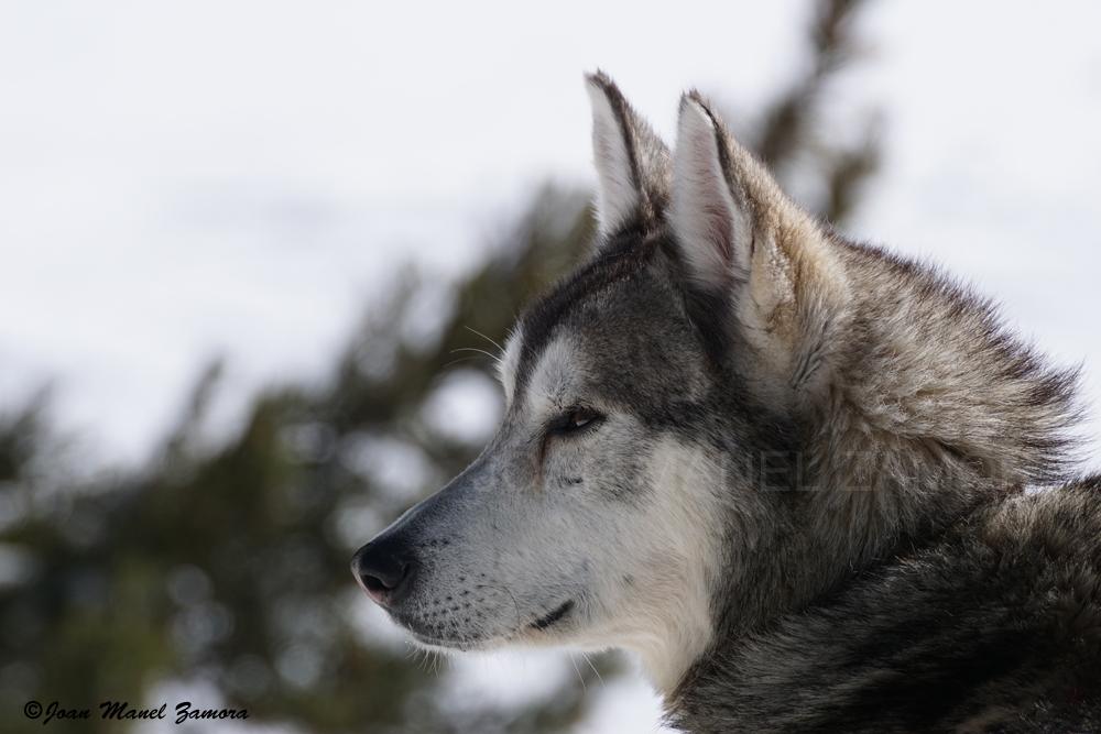 09609 ALASKA