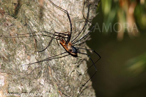 00975 SPIDER