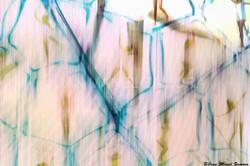 09242 line & forms - FINE ART