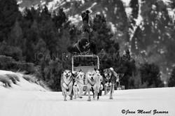 07825 Freestyle musher