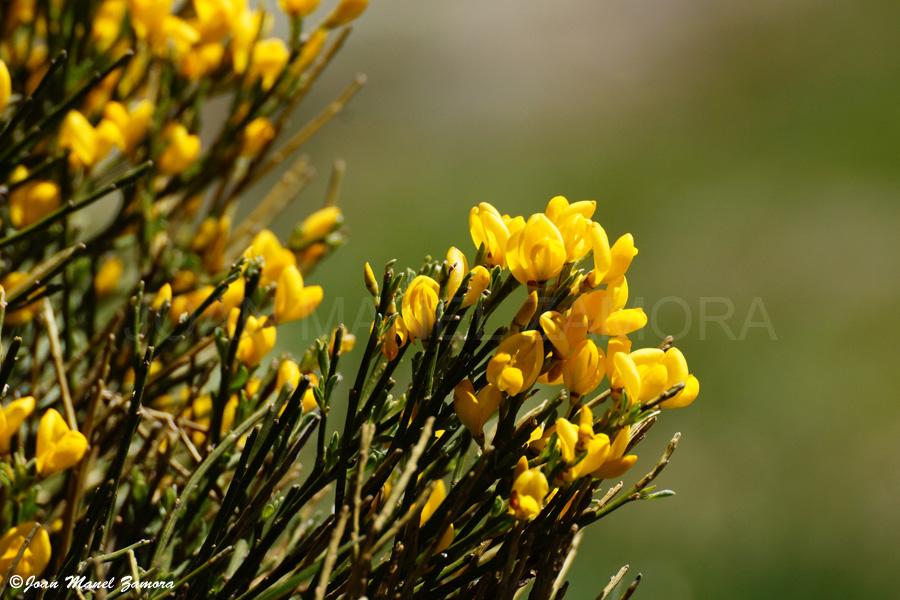 00171 - FLOWER