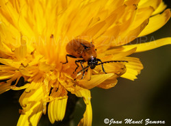 02549 INSECT