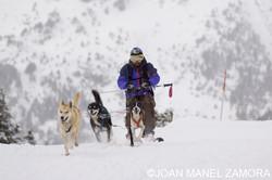 05311 ski joring