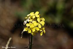 00167 - FLOWER