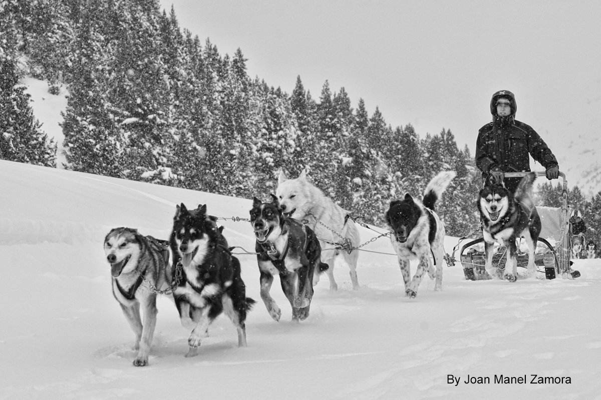 MUSHING ANDORRA 01366