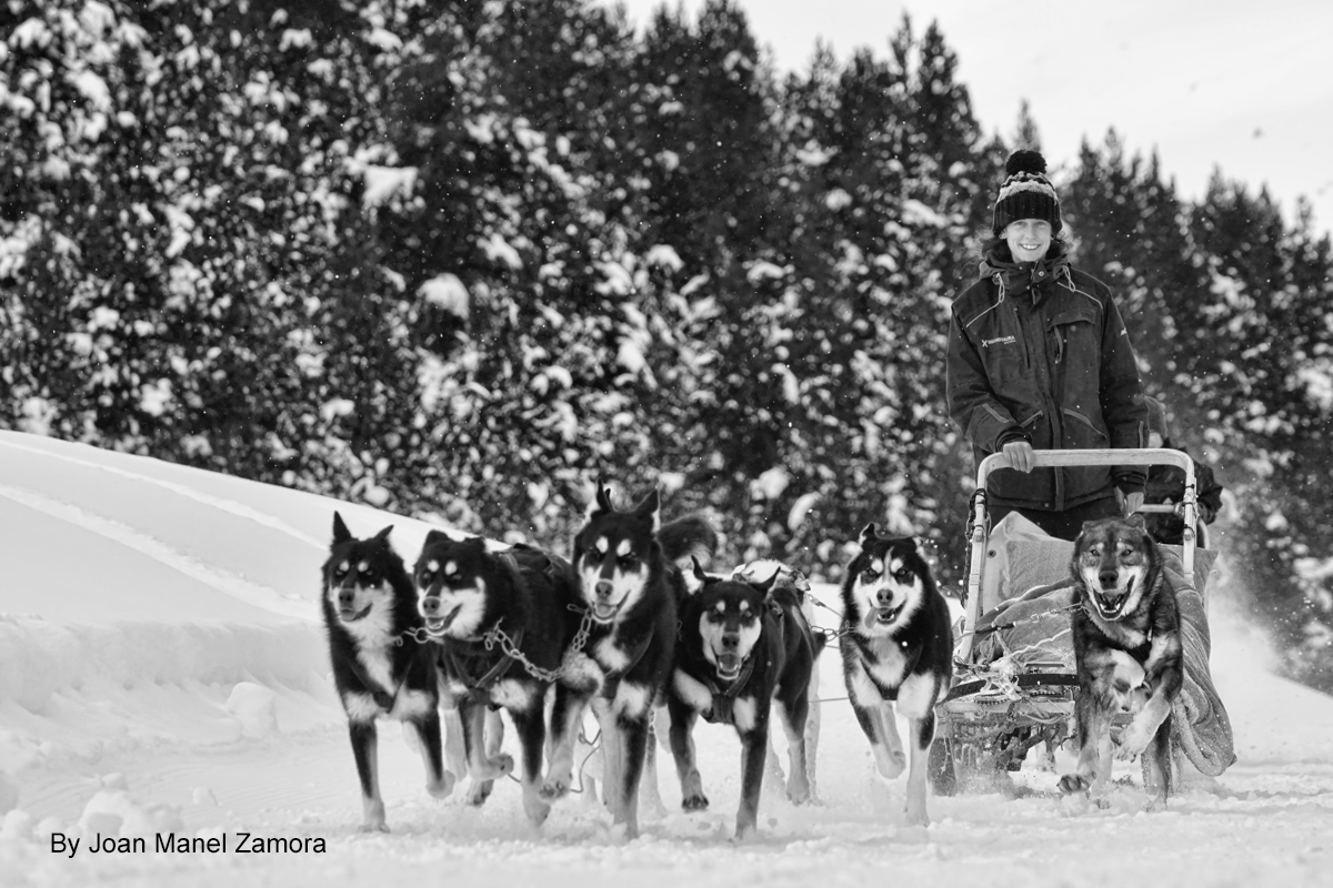 MUSHING ANDORRA 01734