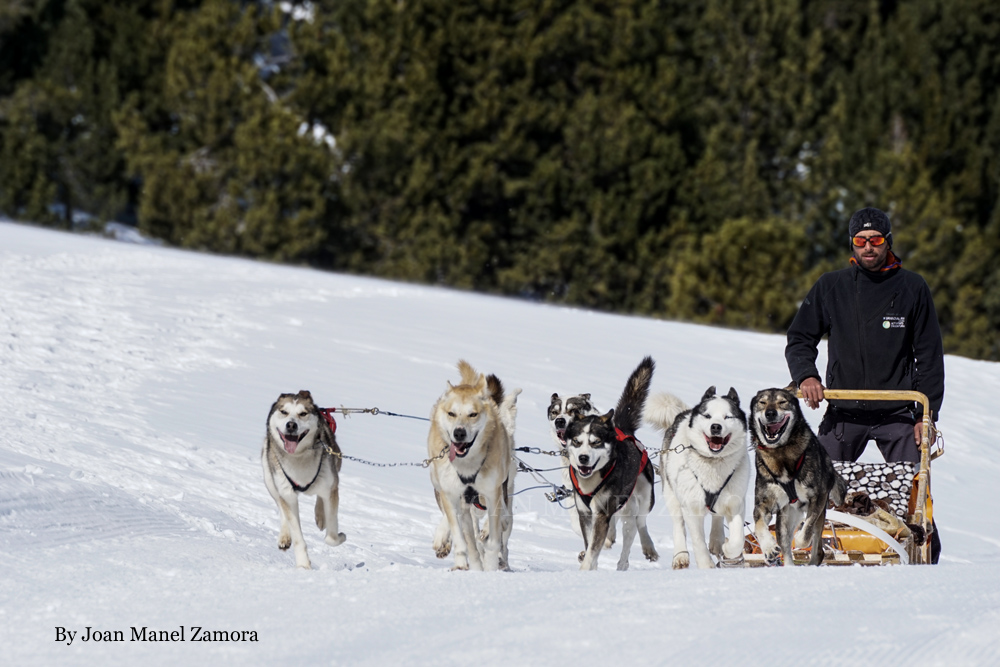 Mushing - Dog sled