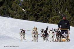 Mushing - Dog sled
