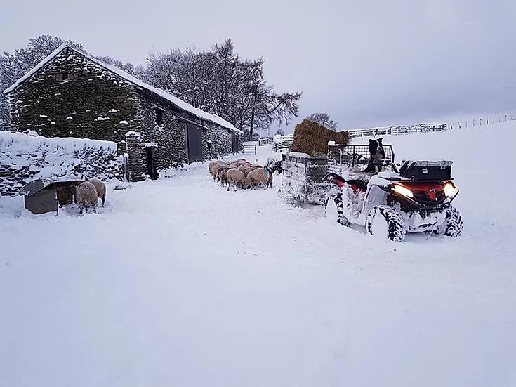 CFORCE 520 Snow.webp